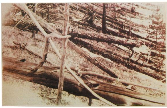 Tunguska catastrophe: fallen trees, photograph by  Leonid Kulik during his expedition in 1927 (courtesy: wikipedia).